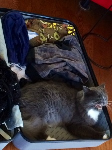 Maurice tried to smuggle himself to London in my case